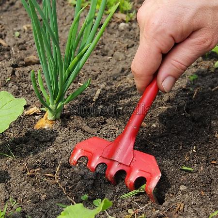 weeding pull up weeds 12