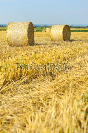 straw bales on stubble field of