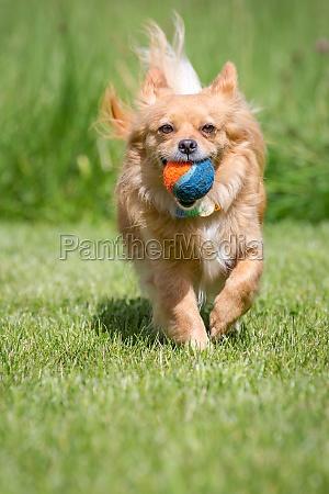 captured ball