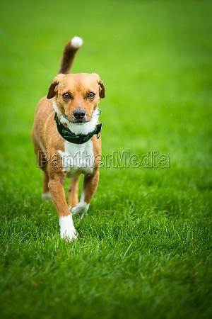 scoundrel dog