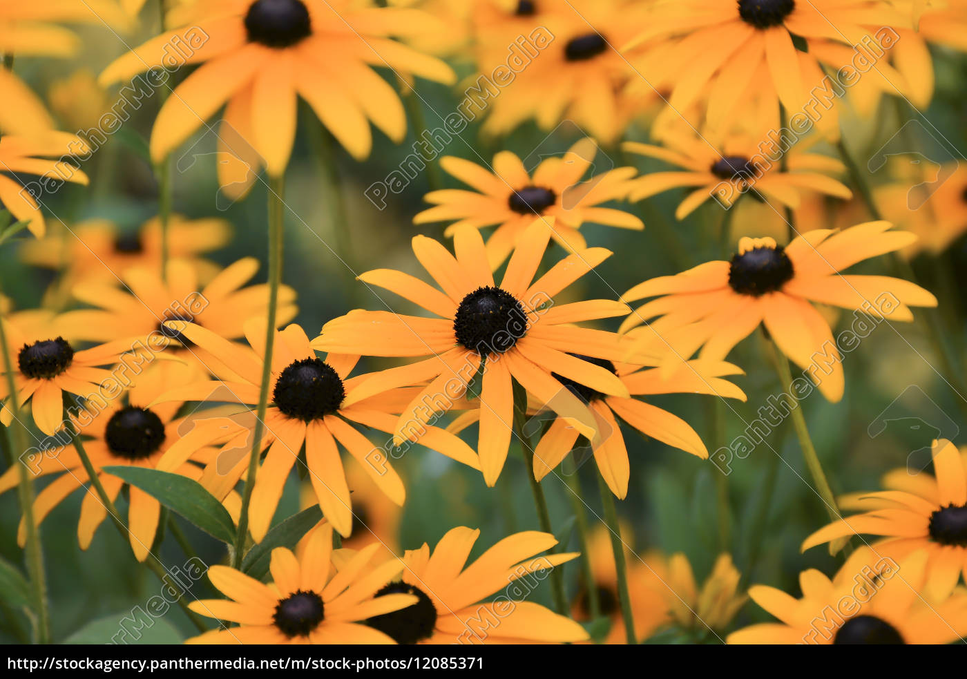 summer, flowers - 12085371