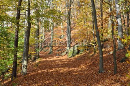 waldweg in autumn