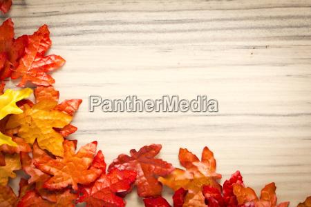 blad trae brun blade farverig staerkt
