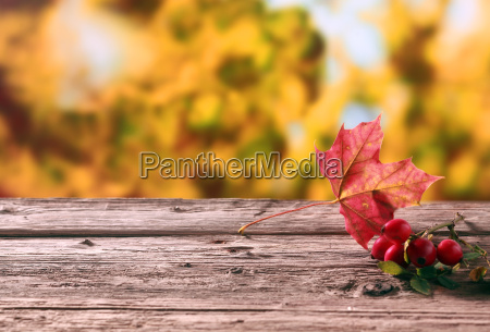 rose hips and an autumn leaf