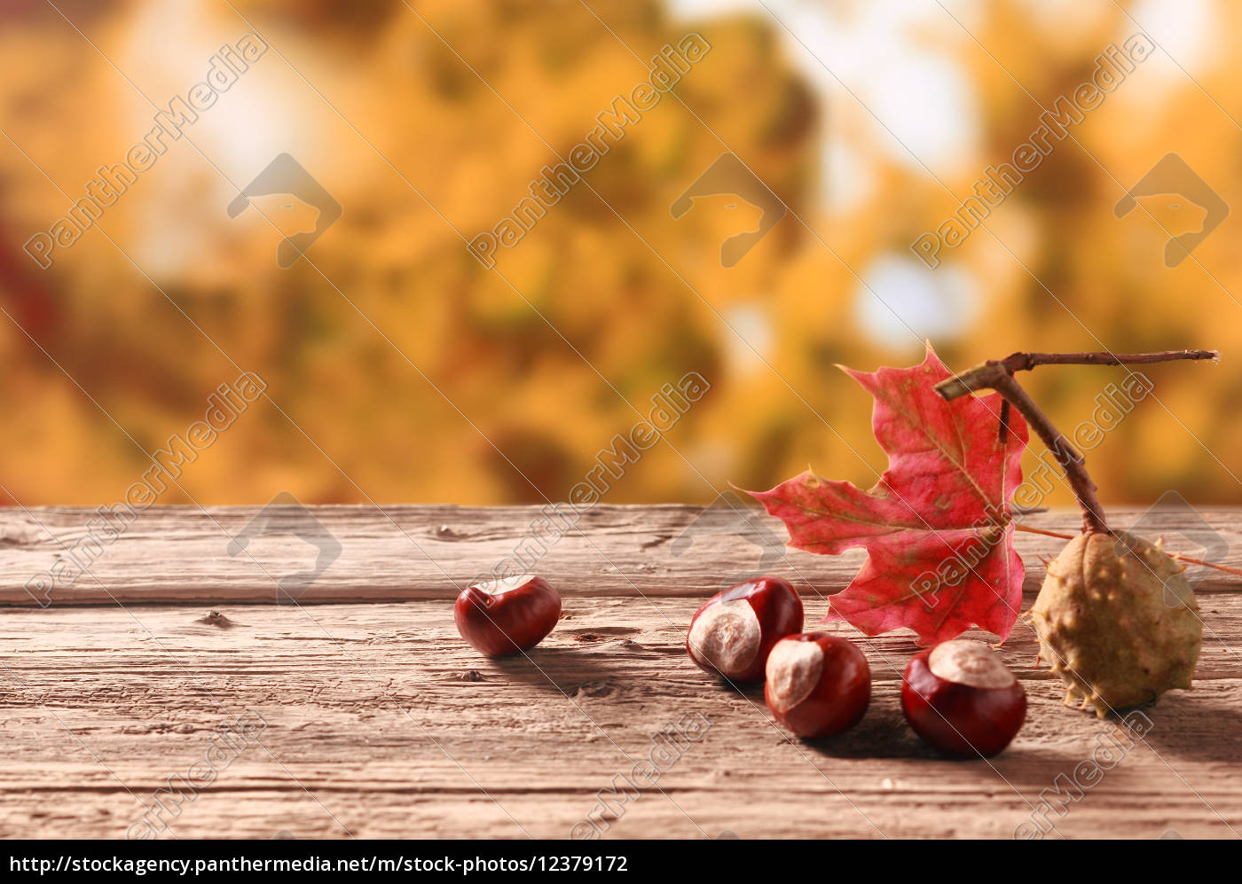 fresh, chestnuts, from, an, autumn, harvest - 12379172