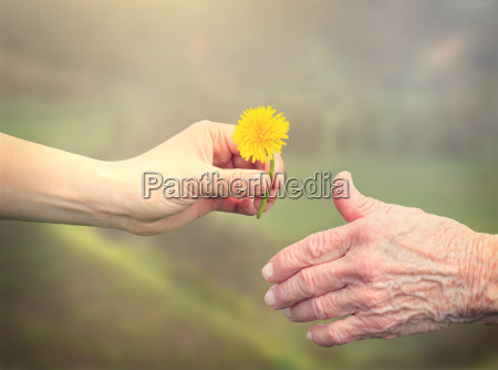 senior woman sharing a flower with