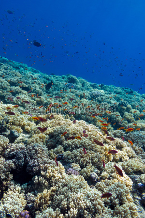 colorful coral reef with hard corals