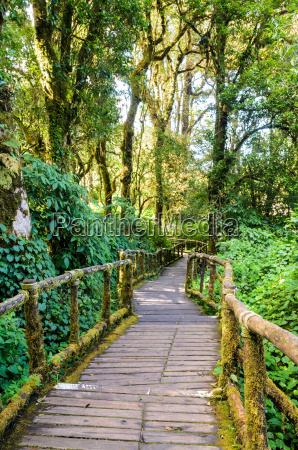 pathway in the forest made of