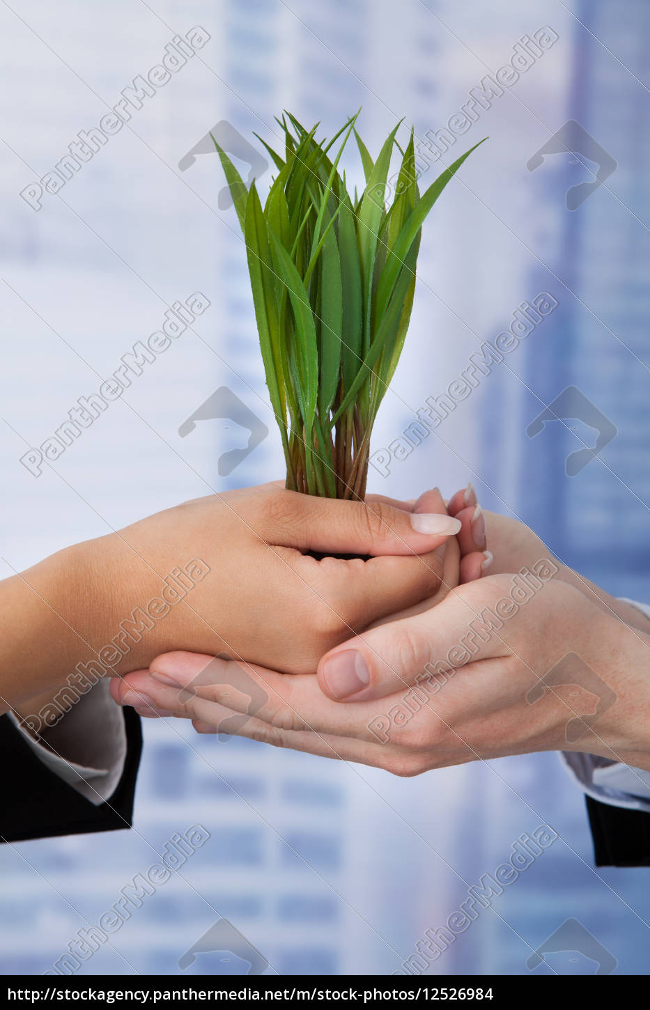 business, people, holding, saplings, in, office - 12526984