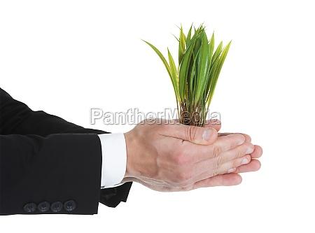 businessman holding saplings