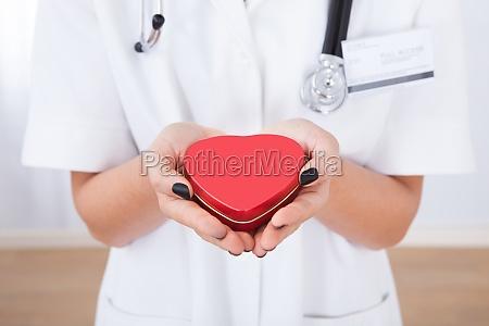 doctor, holding, heart - 12546894