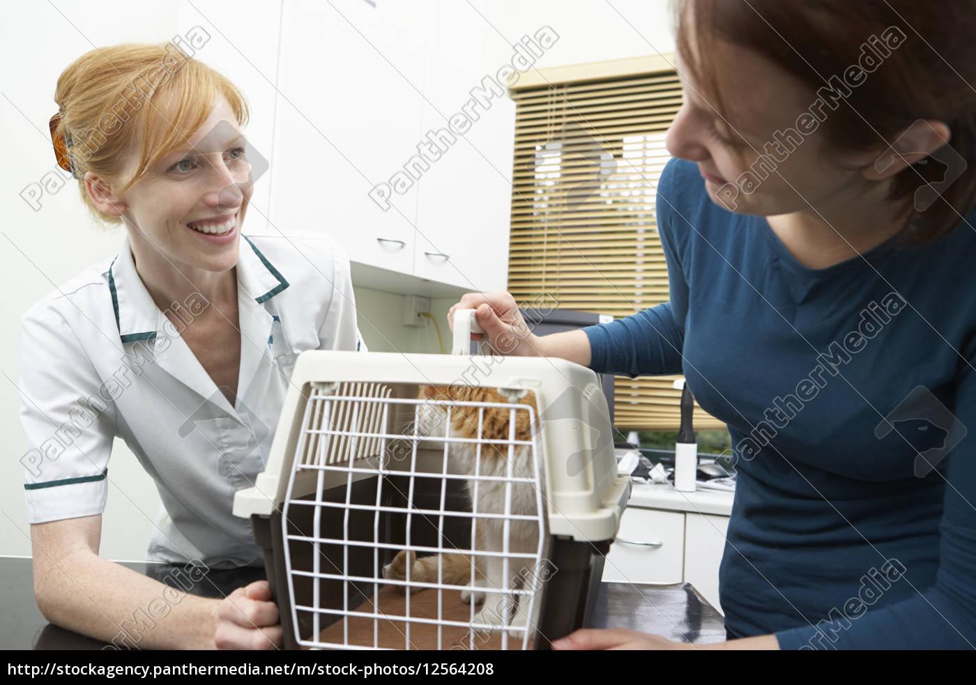 woman, vet, veterinary medicine, nurse, cat, happy - 12564208