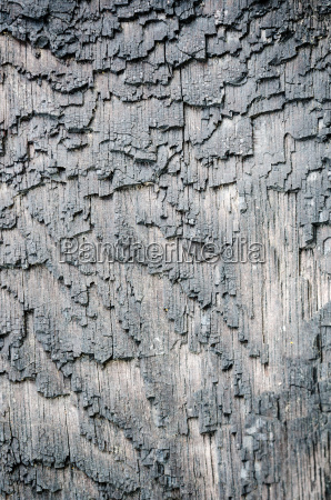 surface bark of trees damaged by