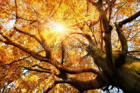 magnificent autumn scene