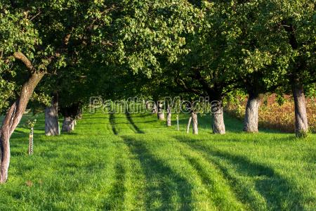 grassy path through sunny avenue