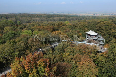 hainich national park in thuringia