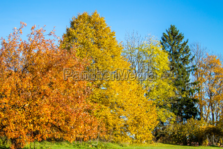 bright colored autumn forest