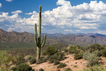 apache trail 4