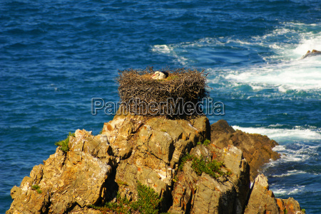 stork nest at the edge of