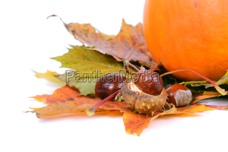 autumn maple leaves with chestnuts and