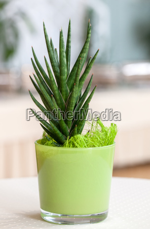 small houseplant in the light green