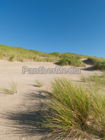 looking into the dunes in summer
