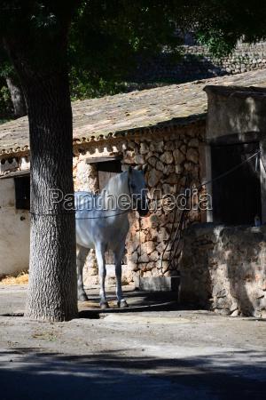 spanien la granja bauernhofmuseum esporles mallorca
