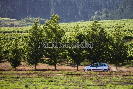 family car in mid distance driving