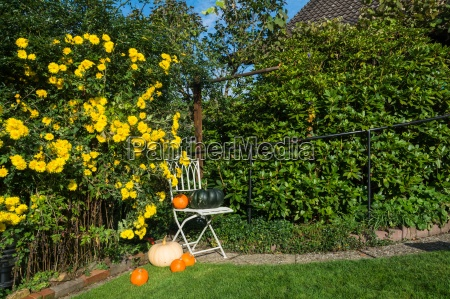 idyllic autumn garden