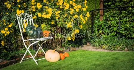 garden chair pumpkins