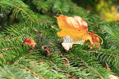 dry autumn leaves on the green