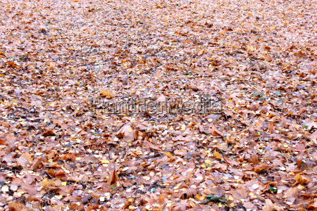 beautiful yellow leaves on the ground