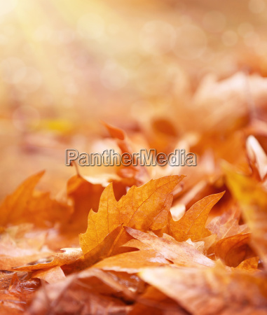 dry foliage on the ground