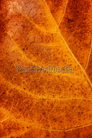 golden dry leaf background