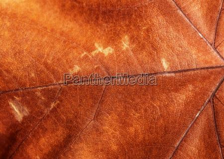 brown dry leaf background