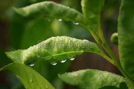 flower plant botany dewdrop page sheet