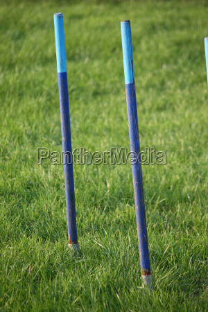 blue agility weave pole items of