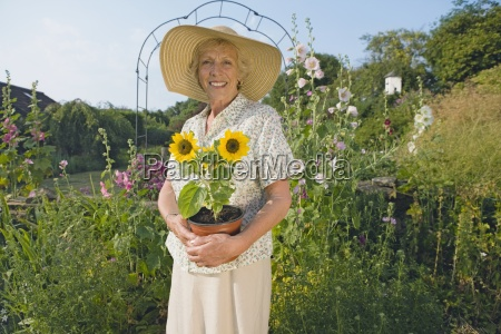 senior woman planting sunflower in cottage