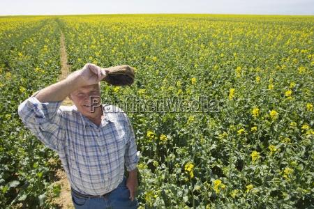 farmer wiping brow in sunny rape