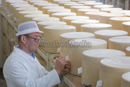 inspector checking young farmhouse cheddar cheese