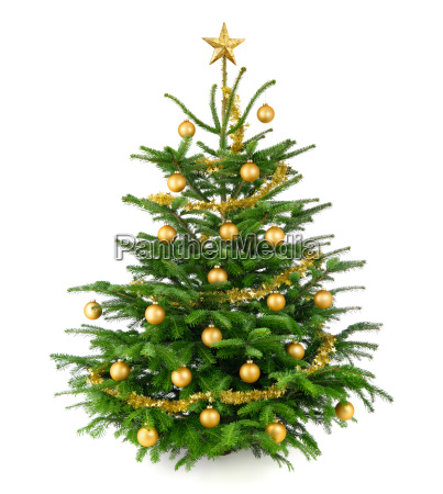 beautiful gold decorated christmas tree