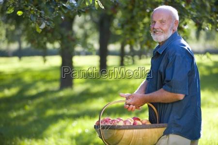 senior man with basket of apples
