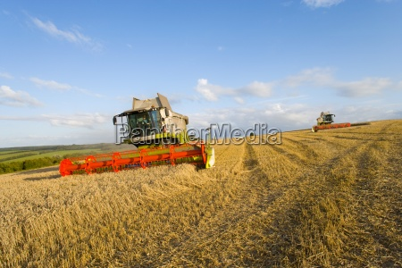 combine harvesting wheat in sunny rural