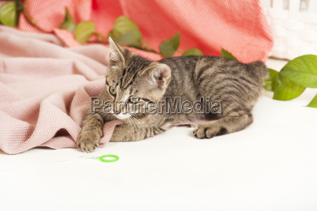 young cat on blanket