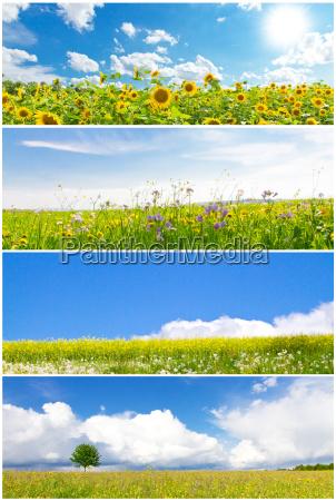spring meadows photo collage
