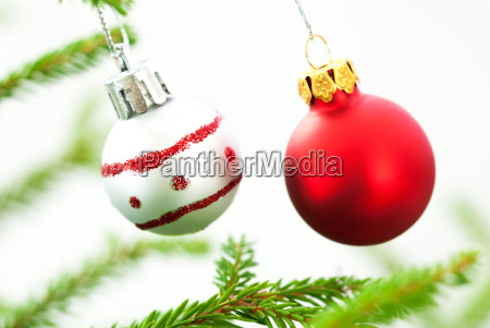 christmas fir tree branch with two