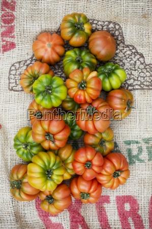 above assorted beef tomato beefsteak tomato