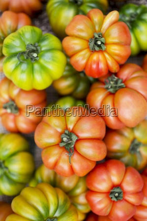 above assorted beef tomato beefsteak tomato