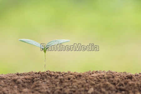 seed young plant on soil in