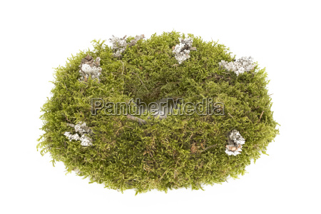 advent wreath of moss exempted